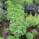Image for Podgorny Gardens